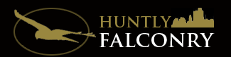 huntly falconry